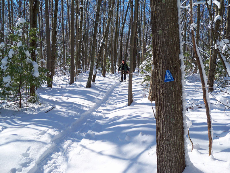 snowshoe-pine-valley-path