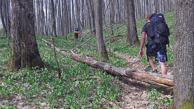 7-dead-fall-on-the-trail
