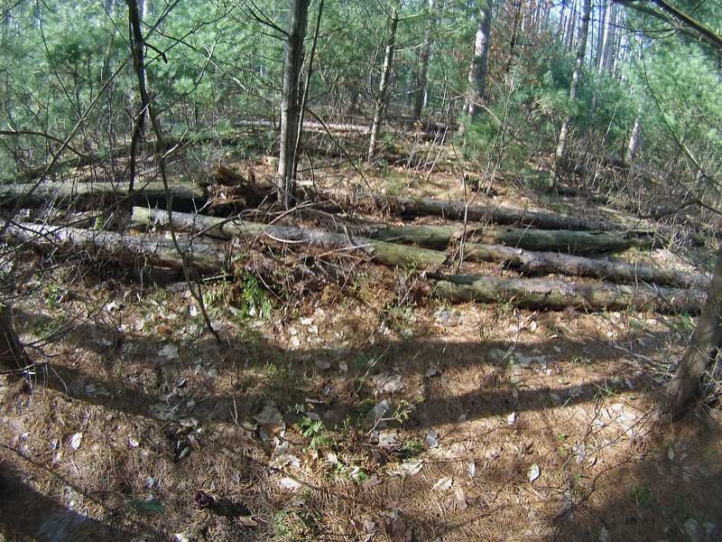 2-red-pine-blow-down-in-trail