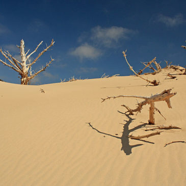 Silver Lake State Park Dune Hike – Day Trip