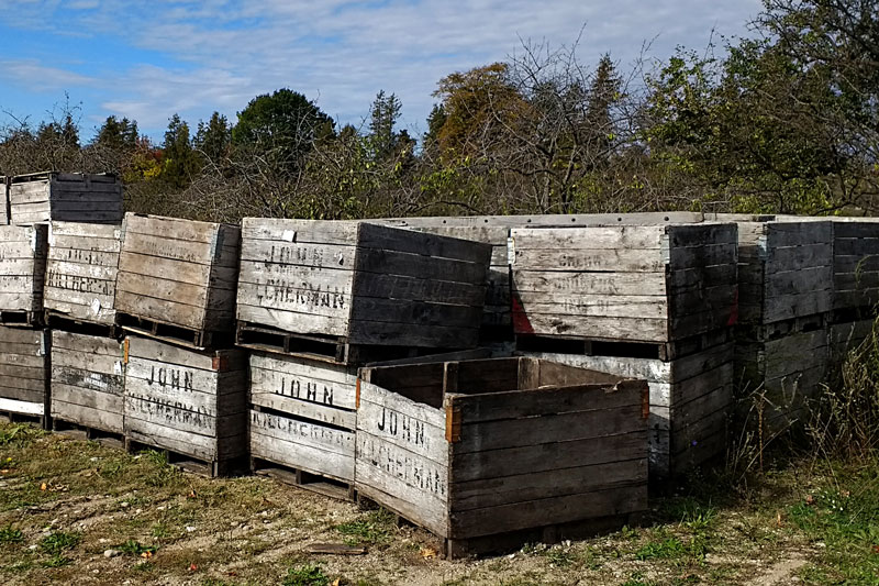 39-apple-crates-christmas-cove-farm