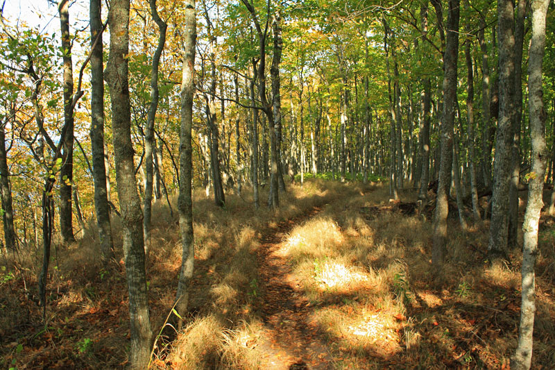 45-hiking-trail-whaleback-natural-area-leland-mi